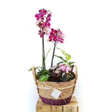 Orquidea y plantas de interior