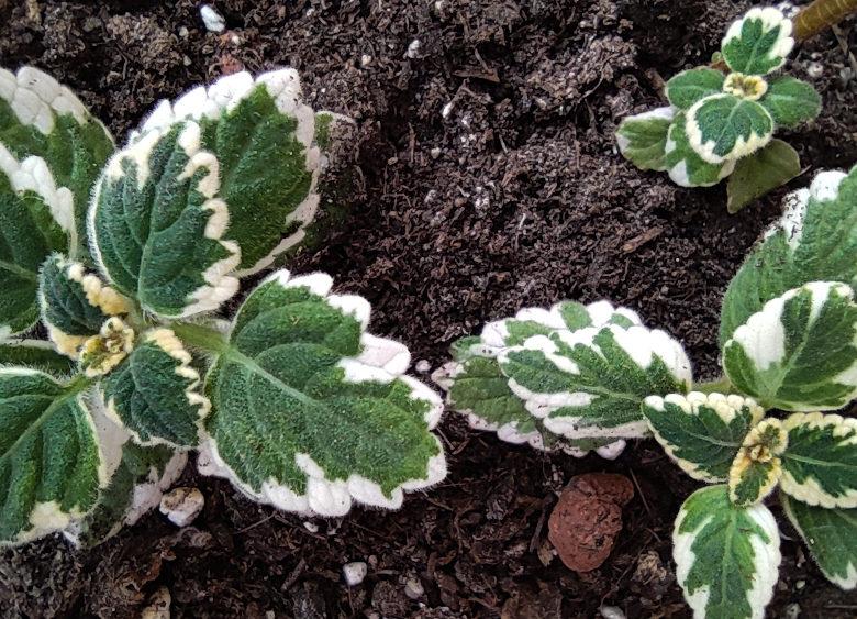 Cómo el cuidado de las plantas ayuda a meditar