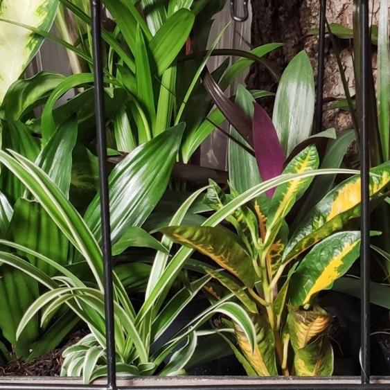 El origen de las plantas de interior
